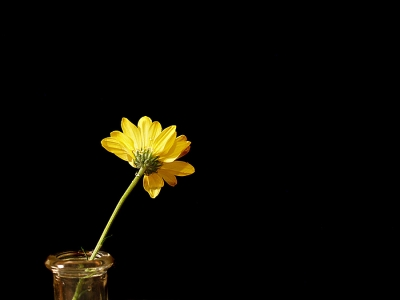 Yellow Flower In Glass